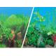 Двустранен фон за аквариум PVC различни десени - височина 60 см А1160