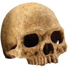 Exo Terra Декор череп - Primate Skull PT 2855