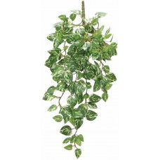 Dragon висящо растение - Epipremnum aureum 50cm