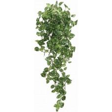 Dragon висящо растение - Epipremnum aureum 90cm