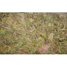 Dragon forest moss - горски мъх 100гр - 5 литра