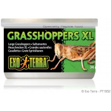 Exo Terra CANNED FOODS SPECIALTY REPTILE FOOD Grasshoppers XL - консервирани скакалци XL 34g - ГЕРМАНИЯ - PT1952