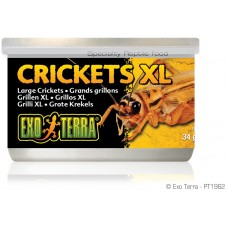 Exo Terra CANNED FOODS SPECIALTY REPTILE FOOD Crickets XL - консервирани щурци 34g -  PT1962