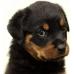 BEAUTY DOG – МЕСО ОТ ПТИЦИ, пълноценна храна за израснали кучета, консерва, Австрия - 1250 гр